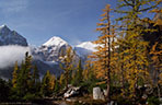 Autumn Larches - Canadian Rockies Gallery I