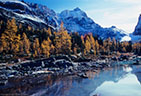 Golden Fall larches at Hungabee Lake, with Mounts Hungabee and Biddle in the background.