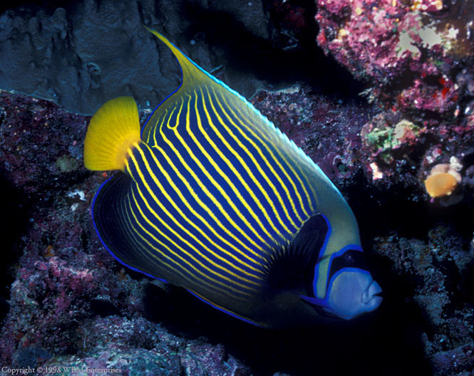 Encounters In Fiji The Great Barrier Reef And The Coral Sea Indo Pacific Underwater