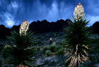 The desert in Bloom, in and around the Organ Mountains of New Mexico
