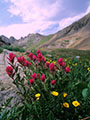 Rose Paintbrush and Cinquefoil by boulder at Clear Lake.