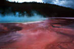 Red algae at Grand Prismatic Spring, in Yellowstone National Park, Wyoming